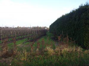 windsingel fruitboomgaarden