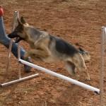 blaftijd honden
